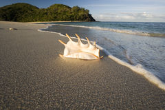 Playa tropical - Fiji en el South Pacific Fotos de archivo libres de regalías