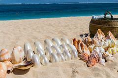 Playa tropical hermosa con la vegetación enorme imagenes de archivo