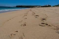 Playa tropical hermosa con la vegetación enorme Fotografía de archivo