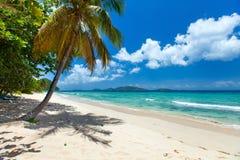 Playa tropical hermosa en el Caribe fotografía de archivo libre de regalías