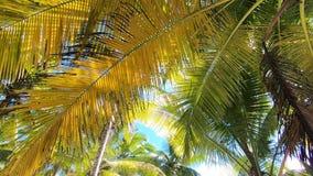 Playa tropical Hoja de la palmera metrajes
