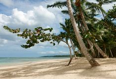 Playa tropical natural, República Dominicana Foto de archivo