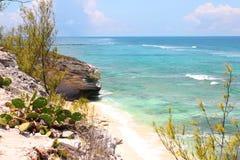 Playa tropical. orilla rocosa con el océano y el cactus de la turquesa. Isla magnífica del turco, las Bahamas Foto de archivo libre de regalías