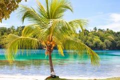 Playa tropical sin tocar de la foto en la isla de Bali Palma con las frutas Cuadro vertical Fishboat empañó el fondo Fotografía de archivo