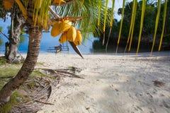 Playa tropical sin tocar de la foto en la isla de Bali Palma con las frutas Cuadro vertical Fishboat empañó el fondo Imagen de archivo
