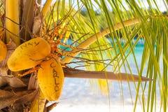 Playa tropical sin tocar de la foto en la isla de Bali Palma con las frutas Cuadro vertical Fondo enmascarado primer Imagen de archivo libre de regalías