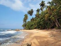 Playa Unspoiled con la vegetación enorme imágenes de archivo libres de regalías