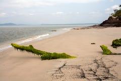 Playa vacía con los troncos cubiertos con alga marina fotografía de archivo