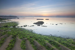 Playa verde de las algas marinas Imagen de archivo