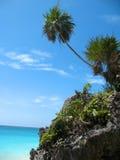 Playa verde de las palmas en México Foto de archivo libre de regalías