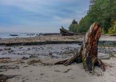 Playa y árbol de la bahía de Neah Imagen de archivo libre de regalías