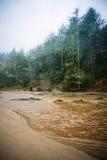 Playa y árboles de hoja perenne en un día lluvioso Imagen de archivo