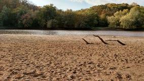 Playa y bosque Foto de archivo libre de regalías