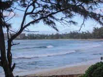 Playa y bosque del centro turístico de la bahía de la tortuga fotos de archivo libres de regalías