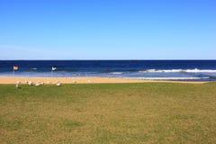 Playa y césped vacíos con las gaviotas fotografía de archivo libre de regalías