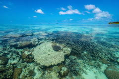 Playa y coral tropicales perfectos del paraíso de la isla Foto de archivo