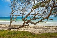 Playa y océano tropical Imágenes de archivo libres de regalías