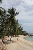 Playa y palmas Imágenes de archivo libres de regalías