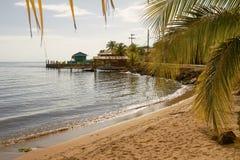 Playa y palmas en la isla de Roatan en Honduras imagenes de archivo