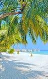 Playa y palmera blancas de Maldives Fotos de archivo