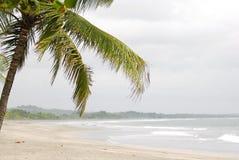 Playa y palmera hermosas Foto de archivo libre de regalías