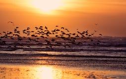 Playa y puesta del sol Foto de archivo libre de regalías