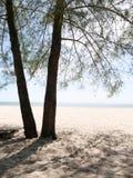 Playa y una silueta del árbol Foto de archivo libre de regalías