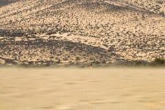 Playas de Sotavento, Fuerteventura Royalty Free Stock Photo