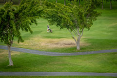Player on golf course Royalty Free Stock Photography