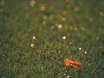 Playfield di calcio Campo da giuoco all'aperto di calcio, povera erba alla conclusione della stagione con le foglie cadute Immagini Stock