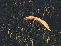 Playfield di calcio Campo da giuoco all'aperto di calcio, povera erba alla conclusione della stagione con le foglie cadute Immagine Stock Libera da Diritti