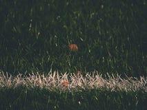 Playfield gräns Closeupsikt till vita linjer på fotbolllekplats Detalj av a av vita linjer Royaltyfri Foto