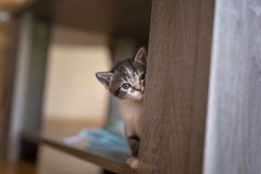 Kitten hiding and peeking royalty free stock image