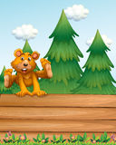 A playful bear above the signboard near the pine trees Stock Photography