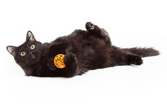 Playful Beautiful Black Cat With Orange Ball Stock Images