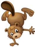 A playful beaver Royalty Free Stock Photos