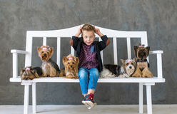 Playful boy sits on a white bench in an environment of five little dogs Stock Image