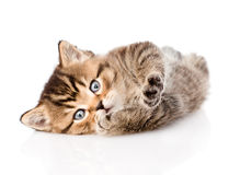 Playful british tabby kitten. isolated on white background Stock Photography