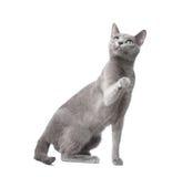 Playful cat stock images