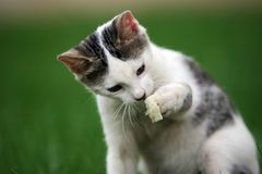 Playful cat Stock Image