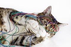 Free Playful Cat Stock Photography - 29846652