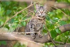 Playful cat climbs a tree Stock Photos