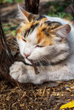 Playful cat gnawing Stock Image