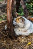 Playful cat gnawing Stock Photo