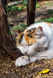 Playful cat gnawing Royalty Free Stock Photo