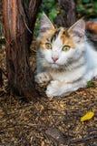Playful cat gnawing Royalty Free Stock Photos