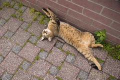 Playful Cat Lying on The Ground Stock Photos