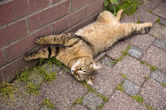 Playful Cat Lying on The Ground Stock Images
