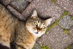 Playful Cat Lying on The Ground Stock Image
