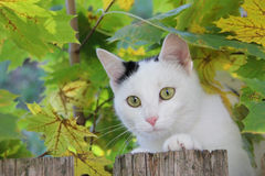 Playful cat in the maple tree Stock Photo